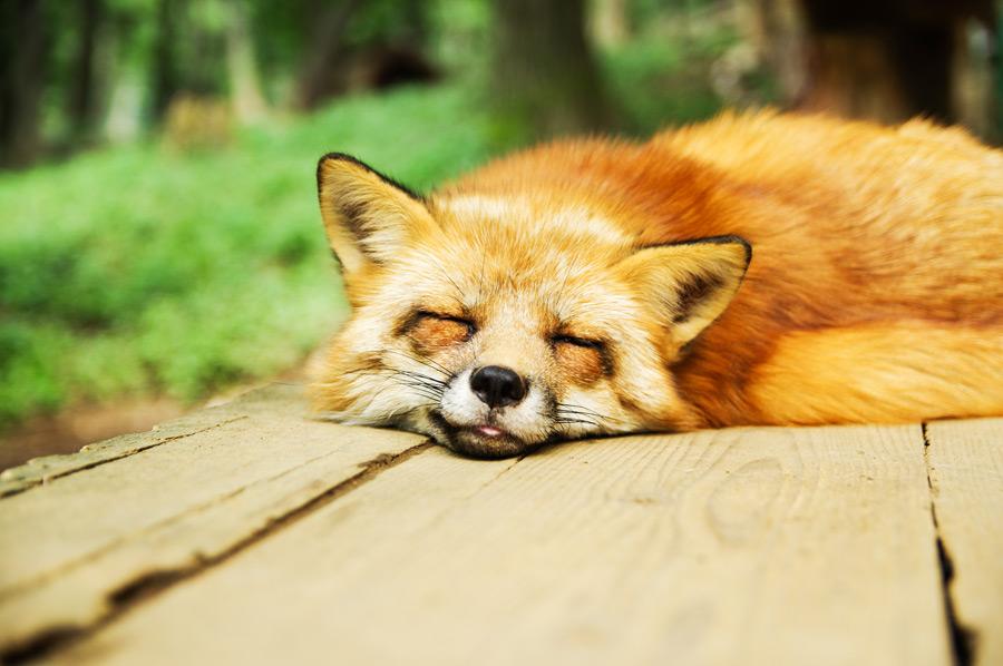 眠すぎるときの眠さと言ったら